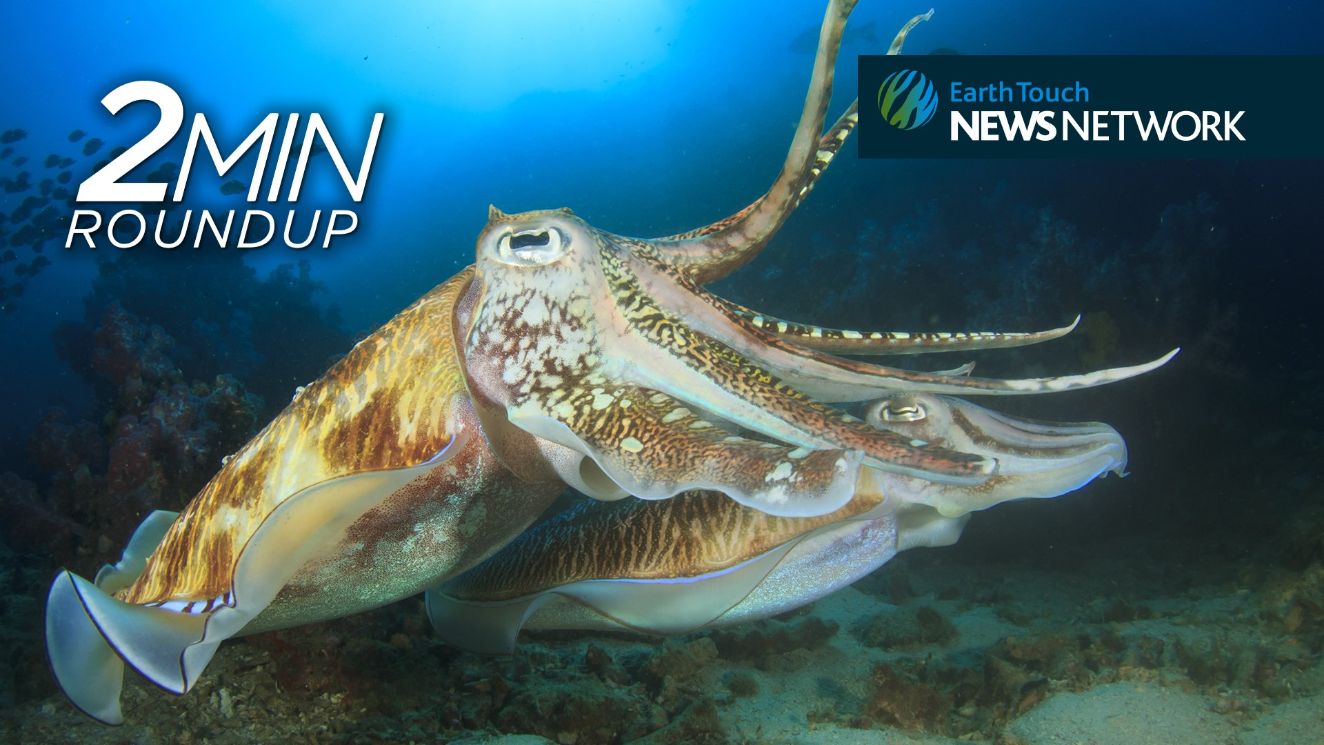 Counting cuttlefish, a sunfish rescue & South Africa's rhino poaching stats