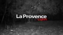 Un loup filmé de nuit dans les Alpes-de-Haute-Provence