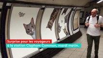 Des chats remplacent les publicités dans une station de métro de Londres