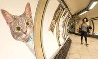 Quand des chats envahissent le métro de Londres pour nous faire réagir