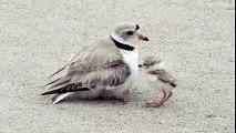 Une maman oiseau fait un tour de magie