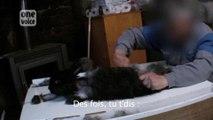 """La méthode inhumaine pour """"épiler"""" les poils des lapins angora"""