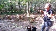 Sofia nourrit les Macaques de Terre de Singes