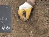 Bien cultiver la pomme de terre - vidéo Dailymotion