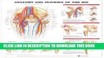 [PDF] Anatomy and Injuries of the Hip Anatomical Chart Full Online