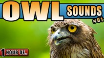OWL SOUNDS AND WIND IN THE TREES NOISE for Sleeping and relaxation. Sleep Sounds and White Noise for 1 hour