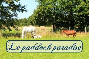Le paddock paradise
