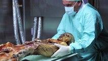 Ötzi, «l'homme des glaces», 25 ans de scoops scientifiques