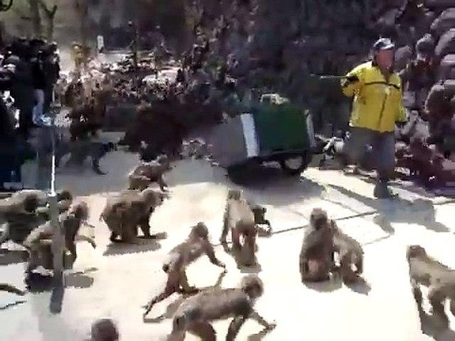 Monkeysfeast