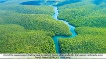 Facts about Rainforest - 12 interesting Facts about Rainforest