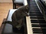 un chat qui joue du piano