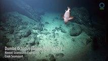 Exploration d'un volcan sous-marin et découverte de sa biologie