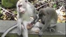 Un singe un peu trop curieux! Petit pervers...
