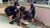 Des pompiers sauvent des canetons bloqués dans un égout