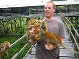 Never peel bananas near monkeys