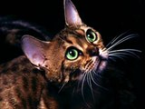 #Cute #Cats #videos of cute #kittens 2016 #funny cat in kitten videos #Compilation