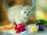 #Funny #cats #Vines #Videos #compilation 2016 #Cute #kittens #doing funny #thing #pictures 614