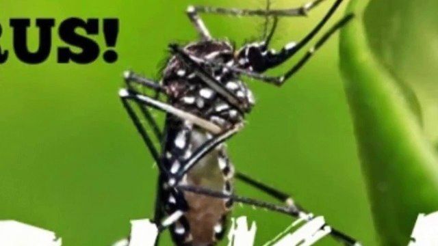 Phát hiện hai bệnh nhân đầu tiên nhiễm virus Zika tại Việt Nam
