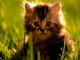 CATs #Cute #Cats #videos of cute #kittens 2016 #funny cat in kitten videos #Compilation 525