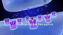 The Limbic System, Methamphetamine (CNS stimulant), and Addiction
