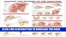 [PDF] Anatomy and Injuries of the Shoulder Anatomical Chart Popular Online