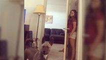 Partie de cache-cache avec un chien