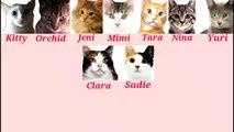 Eight Cats - So Nyuh Shi Dae (SNSD) CMV