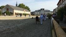Concours de poneys Shetland