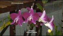 Correio Verdade - 31ª  Exposição Paraibana de Orquídeas, no Shopping Tambiá