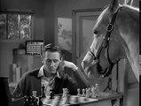 Mister Ed S5   What Kind Of Foal Am I