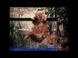 Funny Cats Fights - Cat Videos Funny 2014 - Funny Cats Videos- Funny Animal Videos - funny video