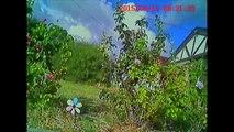 Extreme FPV Walkera Ladybird - Crash