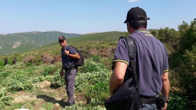 Pezullohet kreu i policisë së Lezhës - Top Channel Albania - News - Lajme