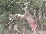 Le chasseur chassé par un cerf