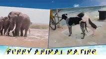 Filler Nasıl Çiftleşir Hayvanlar Alemi İzle
