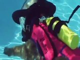 Oui, ce chien fait de la plongée sous-marine... WTF