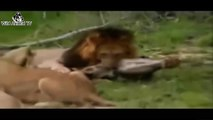 Big Battle Animals Real Fight | Top 10 Craziest Animal Fights Caught On Camera