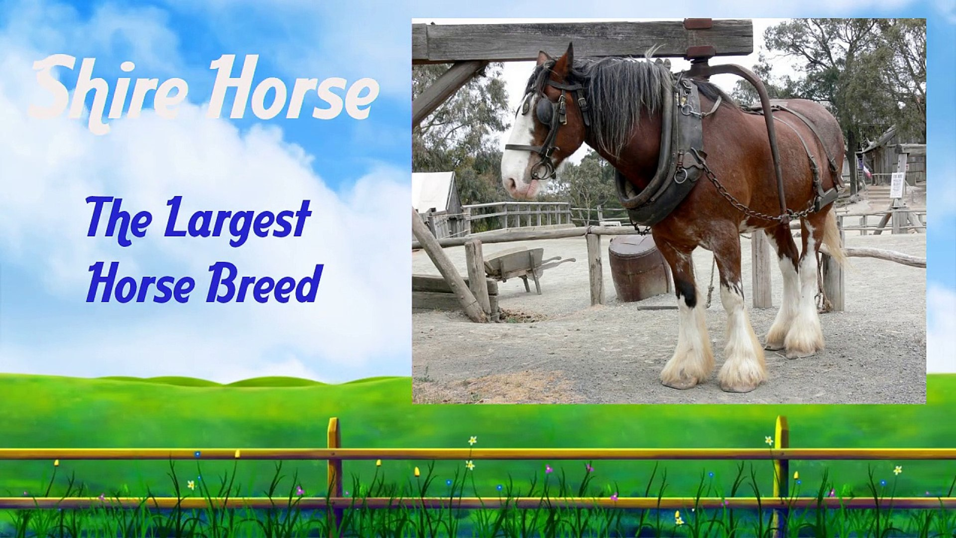 Largest Horse Breed Video Dailymotion