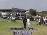 Concours d'Elevage Frisons Bastogne 2007