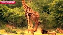 La Mayoría De Los Increíbles Animales Salvajes Ataques De La Gran Batalla De Los Animales De Lucha,León,Jirafa,Una Anaconda Gigante,Perro – Rachel