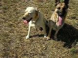 mes chiens, Vidocq et Vounie, assis