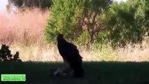 León vs Serpiente, Águila Ataques Anaconda Gigante # la Mayoría de los Increíbles Animales Salvajes Ataques