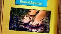 ASMR Aquarium (Wet close binaural sounds, popping of bubbles) Sarah ASMRotica