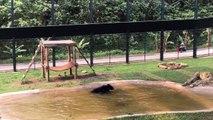 Après avoir été torturé et passé 9 ans en captivité, un ours passe du bon temps dans l'eau