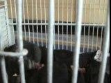 les bébés hamsters de Candy !