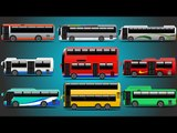 City Buses | Learn Transport of Countries | Bus For Kids | Bus Around The World