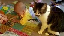 Birlikte Oynamak Komik Kediler Ve Bebekler - Sevimli Kedi Together Playing Funny Cats And Babies - Cute Cats