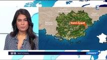 Var : les bébés tortues ont rejoint la mer à Saint-Aygulf