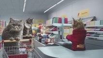 Des chats qui font leurs courses ! MDR ! [HD]
