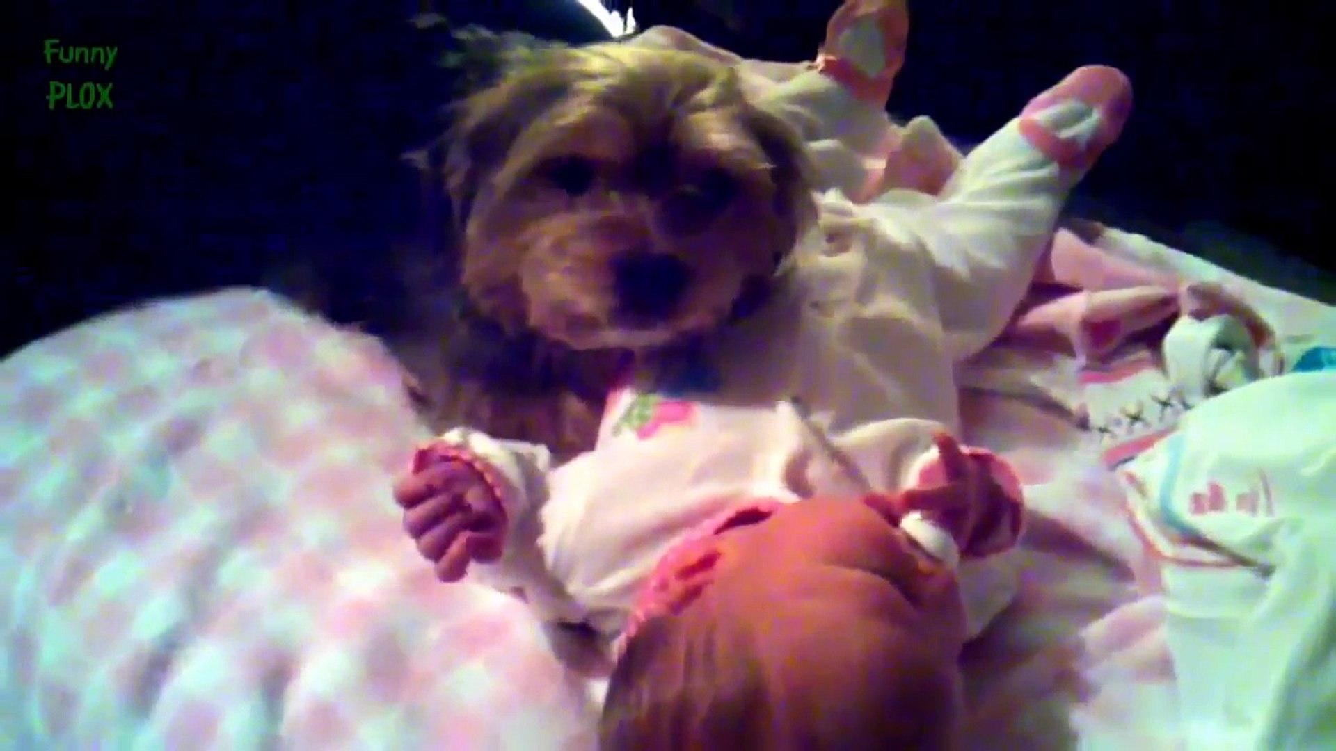 funny animals love babies